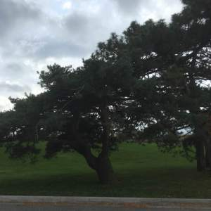 ground tree pv6